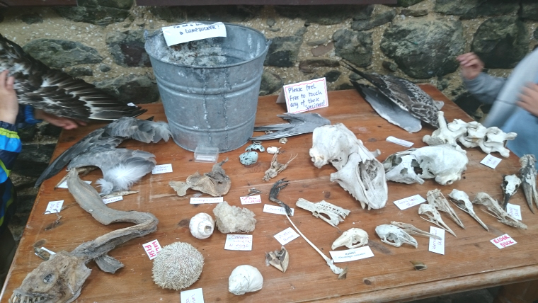 Image of display-table-with-skulls-bones-and-feathers-information-centre-inner-farne