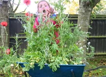 Image of girl-hiding-behind-tall-wildflower-plants-planted-in-wheelbarrow