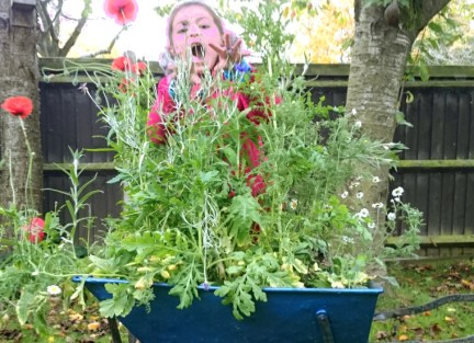 Image of girl-hiding-behind-tall-wildflower-plants-planted-in-wheelbarrow