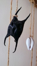 Image of mermaids-purse-and cowrie shell hanging-on-string