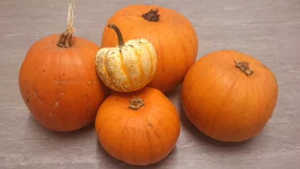 pile-of-pumpkins