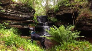 Image of Roughting Linn Waterfall, Northumberland with black dog in foreground