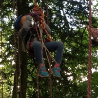 Image of child in rope harness hanging from tree