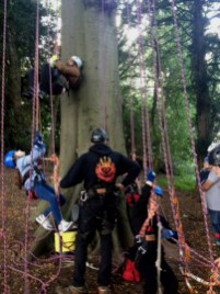 Image of man-assisting-children-with-climbing-ropes-at-bottom-of-tree1