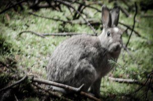 Image of rabbit in undergrowth