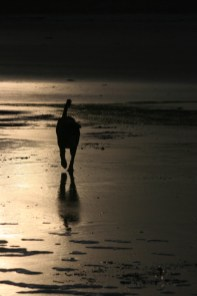 silhouette-of-dog-and-reflection-in-wet-sand-at-sunset