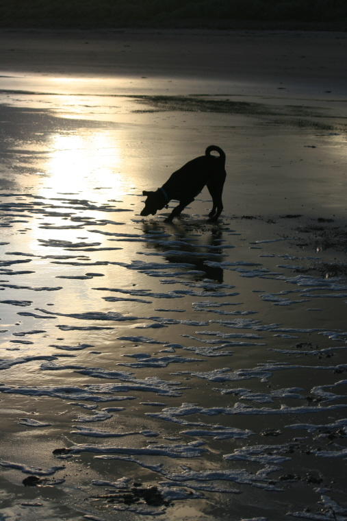 Image of silhouette-of-dog-on-wet-sand-playing-with-ball