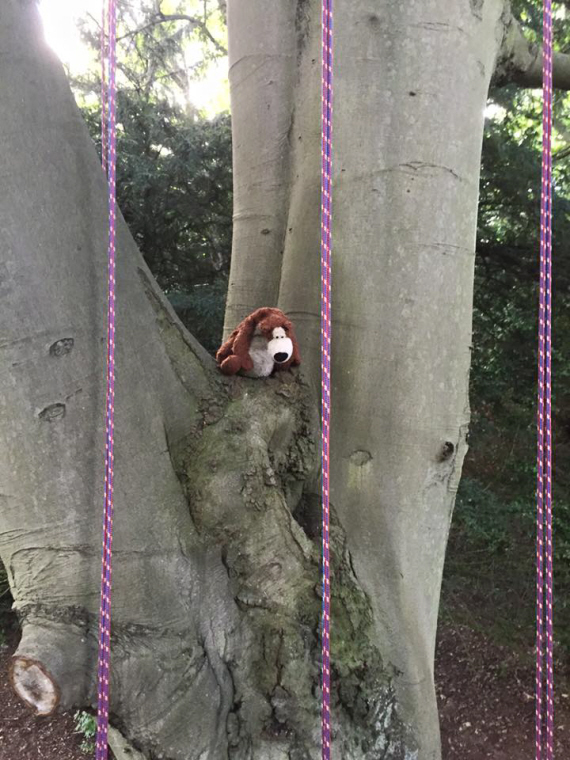 teddy-bear-in-fork-of-a-tall-tree
