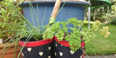 Image of wellie-tops-with-chives-and-parsley-growing-inside
