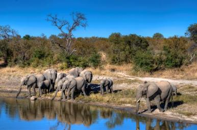 Image of herd of 11 elephants-at-watering-hole in African bush