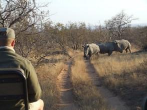 Image of man-driving-jeep-with-rhino-ahead