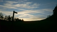 Image of signpost-and-fir-trees-silhouetted-against-evening-sky
