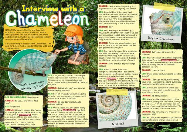 chamaeleon-interview