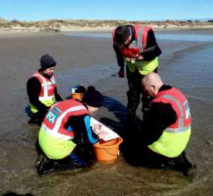 Image of officers measuring and recording catch details of fish survey at Beadnell