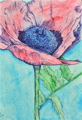 Image of ink drawing of poppy (c) Ariel Lewis painted in watercolour by Caroline Brown