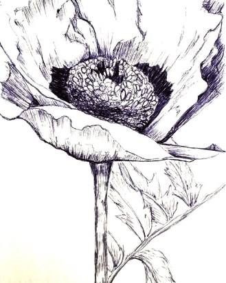 Image of black and white ink drawing of poppy