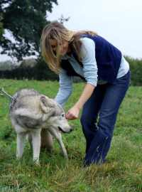 Image of woman bending to stroke chained wolf