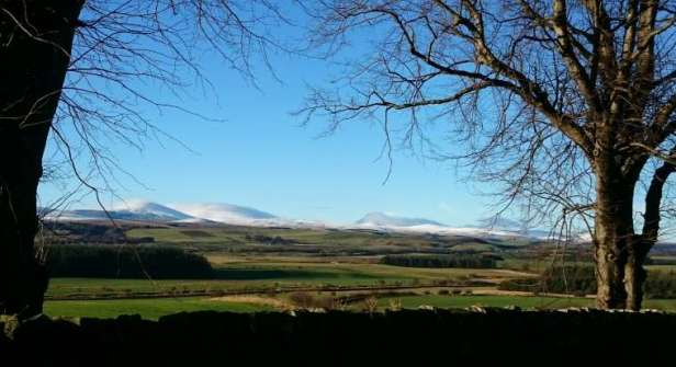 Image of distant snow capped hills with green fields, dry stone wall and bare winter trees in foreground