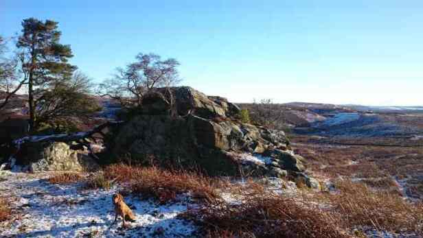 Image of ginger dog sitting in light snow in front of large crag with moor and hills behind