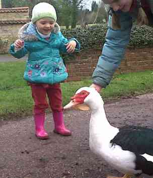 Image of grinning and excited toddler wearing cream hat, turquoise coat and pink wellies as woman in background feeds Muscovy duck from brown paper bag on stony ground