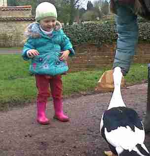 Image of happy toddler wearing cream hat, turquoise coat and pink wellies as woman in background feeds Muscovy duck from brown paper bag