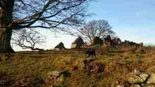 Image of ruined house on skyline of hill with black dog in front, trees to left and children sitting on ruined wall barely visible