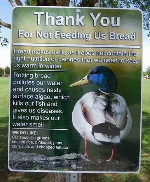 Image of sign showing male mallard and writing asking that ducks be fed healthy food and not bread with grass and trees behind