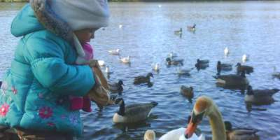 Image of toddler at edge of lake wearing turquoise winter coat and white bunny hat holding a brown paper bag feeding swans, ducks and geese