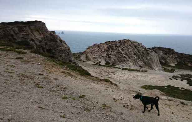 Image of black dog on rocky ground with rock outcrop behind and cliff view of small islands in sea in distance