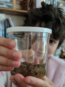 Image of girl holding clear pot with caterpillars and one chrysalis inside