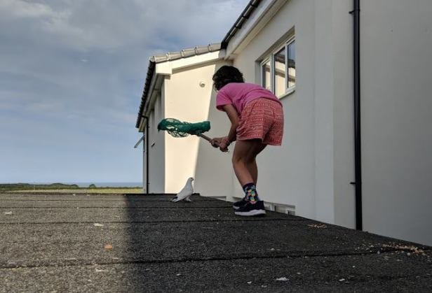 Image of girl in pink top standing on flat garage roof with green net attempting to catch white dove