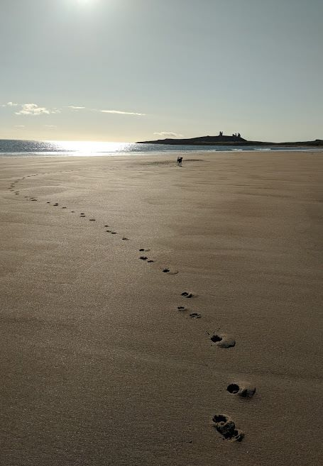 Image of dog pawprints on empty beach with dog in mid ground and ruined castle behind
