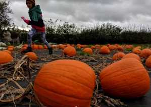 Image of child running in field of pumpkins with storm clouds in background