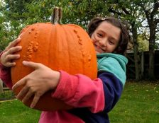 Image of smiling girl struggling to hold huge orange warty pumpkin in her arms