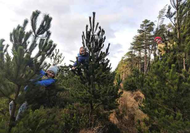 Image of three children barely visible up evergreen trees
