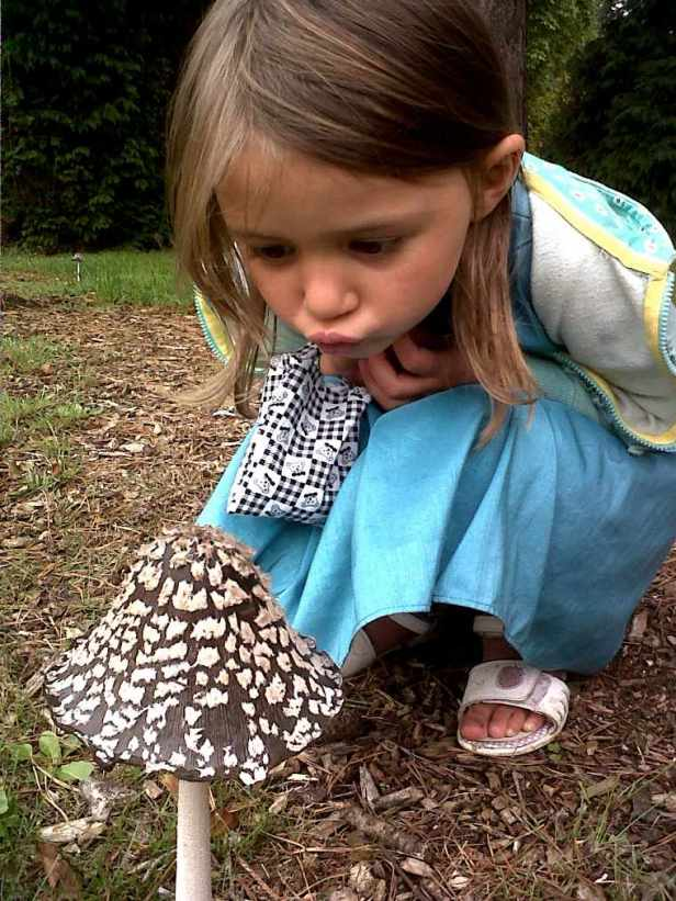 Image of nature spotting young girl looking closely at large brown and white spotted fungi in grass