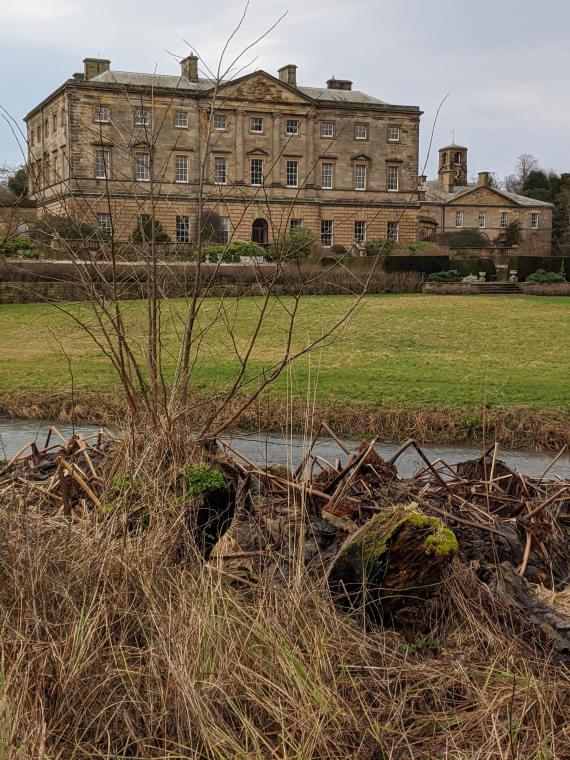 Image of dead plants and bare leaved bush in front of Howick Hall stately home