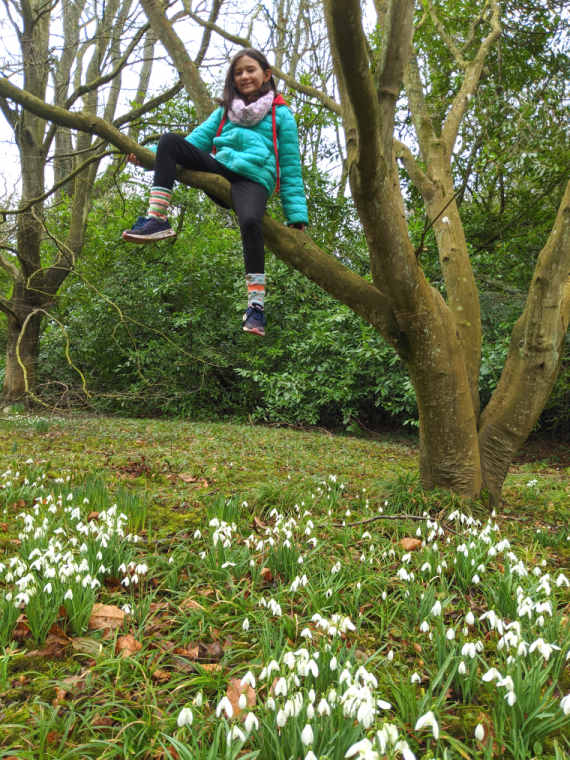Image of girl sitting on branch in tree with grass and snowdrops underneath