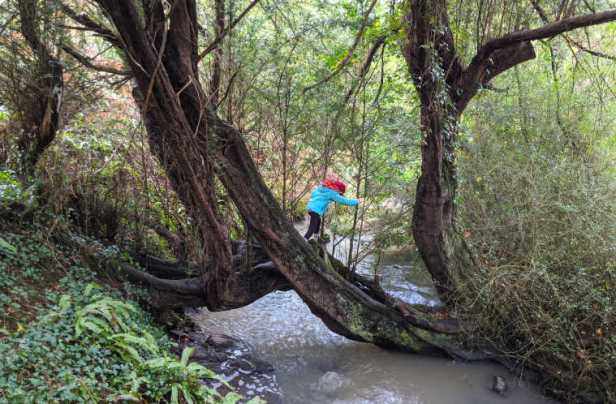 Imge of girl climbing on tree log across stream