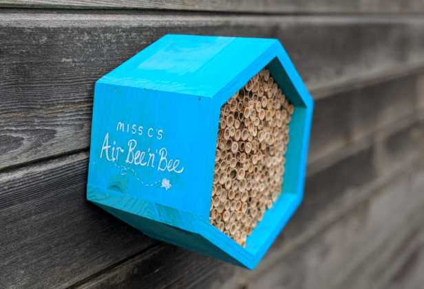 Blue hexagonal wooden bee hotel box attached to shed wall with words Miss Cs Bee and Bee written on the side