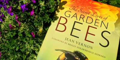 Yellow book titled The Secret Lives of Garden Bees by Jean Vernon next to purple aubretia flowers