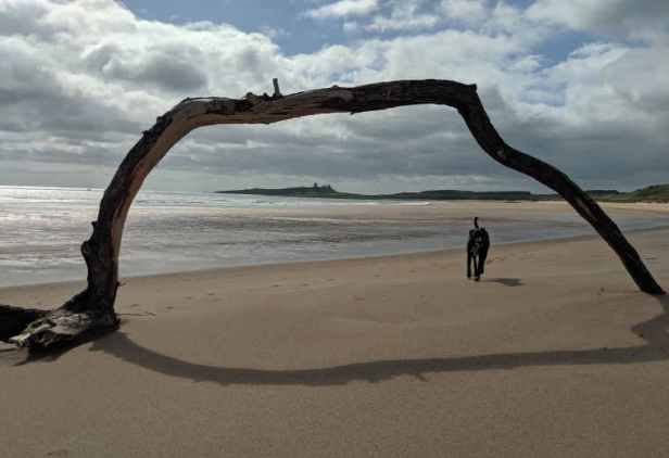Driftwood arch on beach with dog running through, castle on headland in distant background and cloudy sky