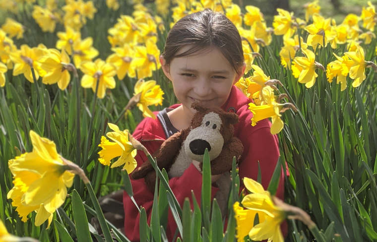 Girl cuddling bear in field of daffodils