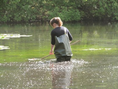 woman-in-waders-up-to-thighs-in-lake-with-net