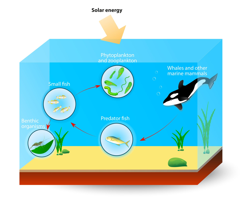 Marine Food Webs