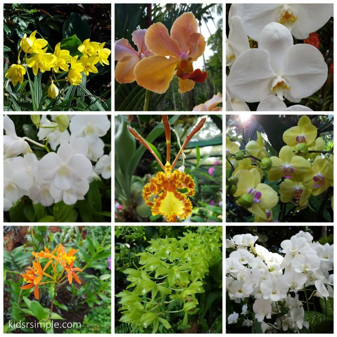Here are the white and yellow orchids