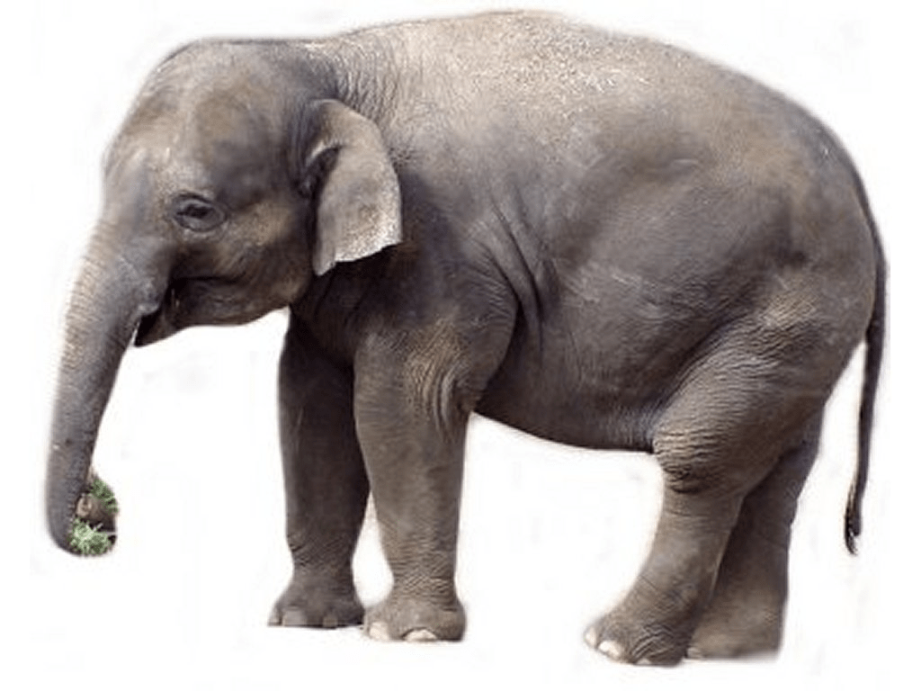 Elephant Pictures Kids Search