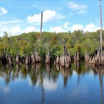 Wordless Wednesday: The Dead Lakes
