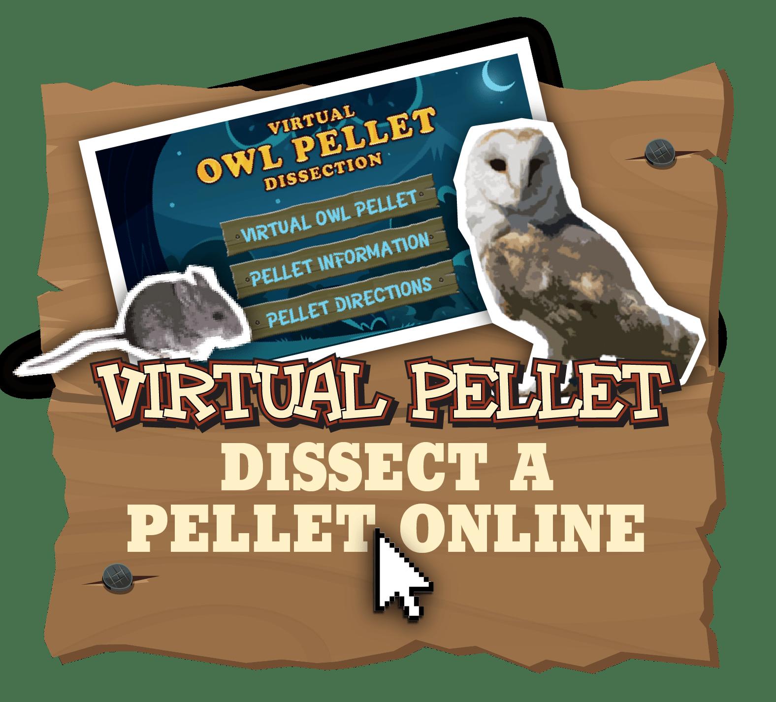 Owl Pellet Dissection Lab Worksheet