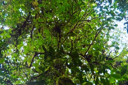 Costa Rica Rainforest Canopy- Kid World Citizen
